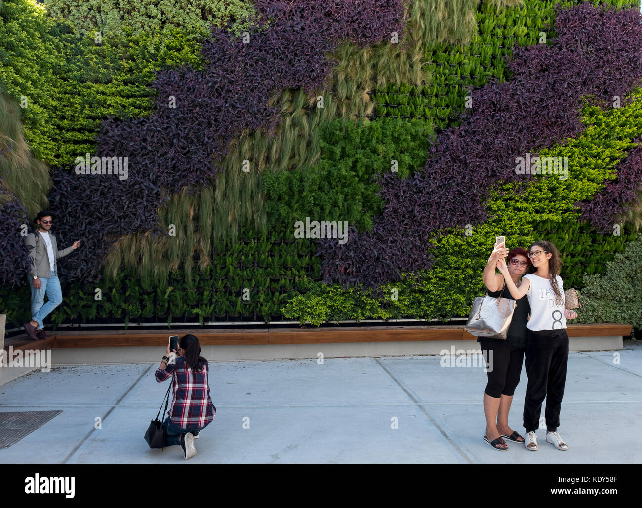 The Green Living Wall in Paphos old town, Cyprus. The vertical garden was created by garden designer Thanasis Evripidou - Stock Image
