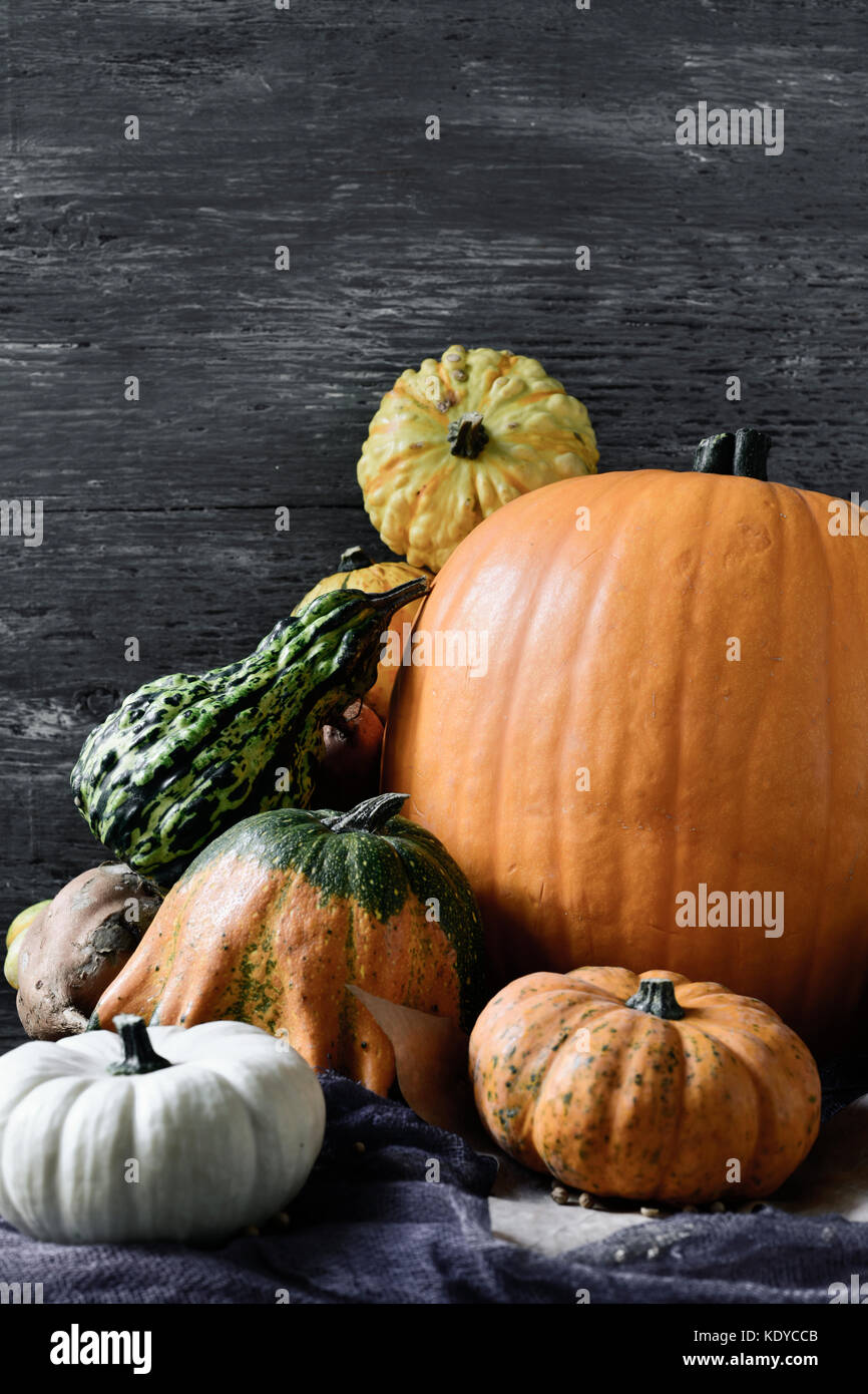 closeup of an assortment of different pumpkins against a gray rustic wooden background with a blank space on top - Stock Image