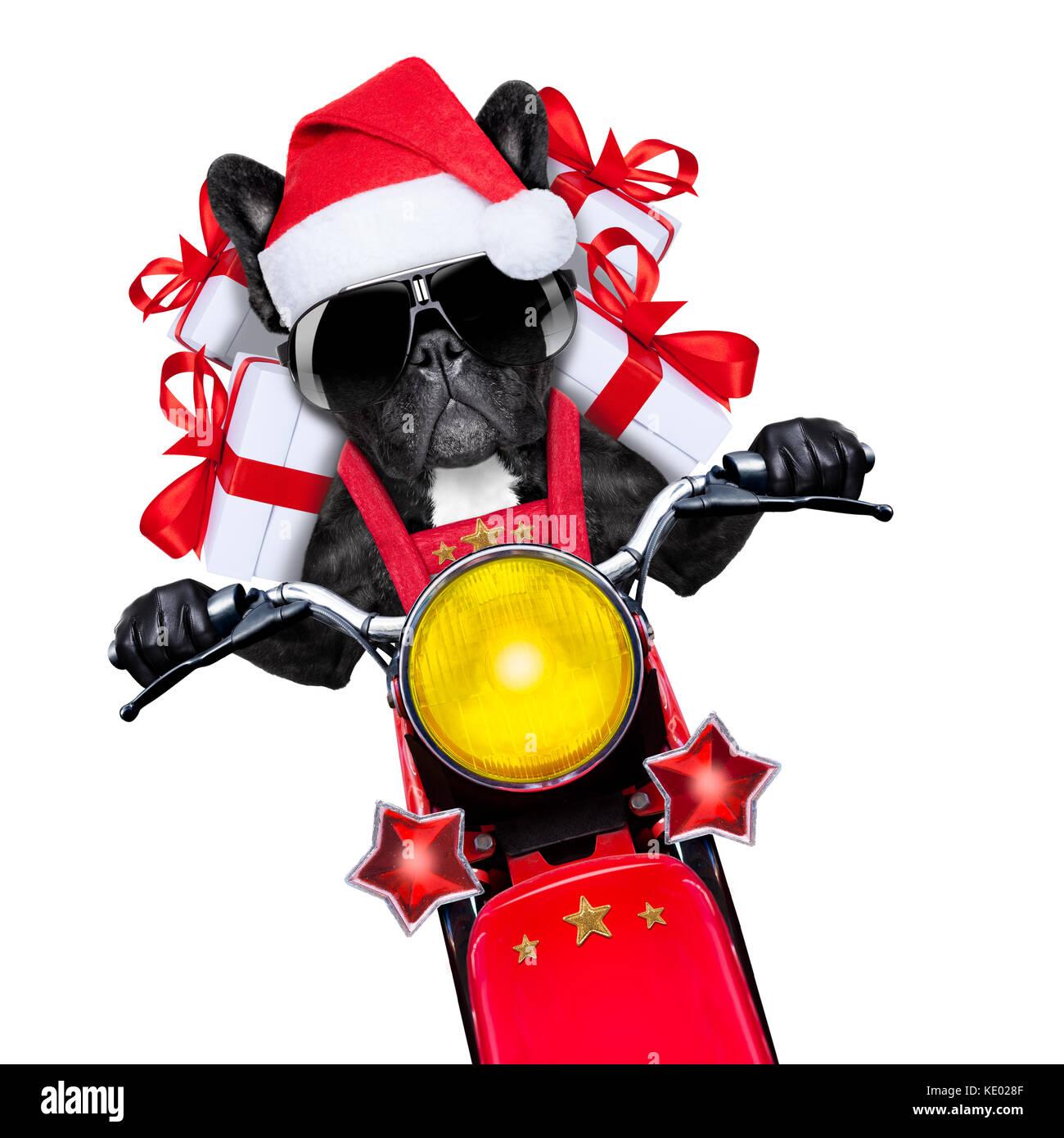 santa claus dog on motorbike bringing presents or gifts to everyone