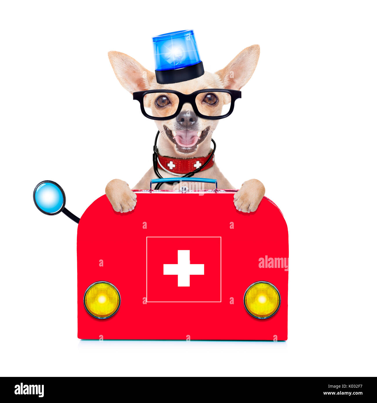 chihuahua dog as a medical veterinary emergency doctor with stethoscope and first aid kit behind a white and blank - Stock Image