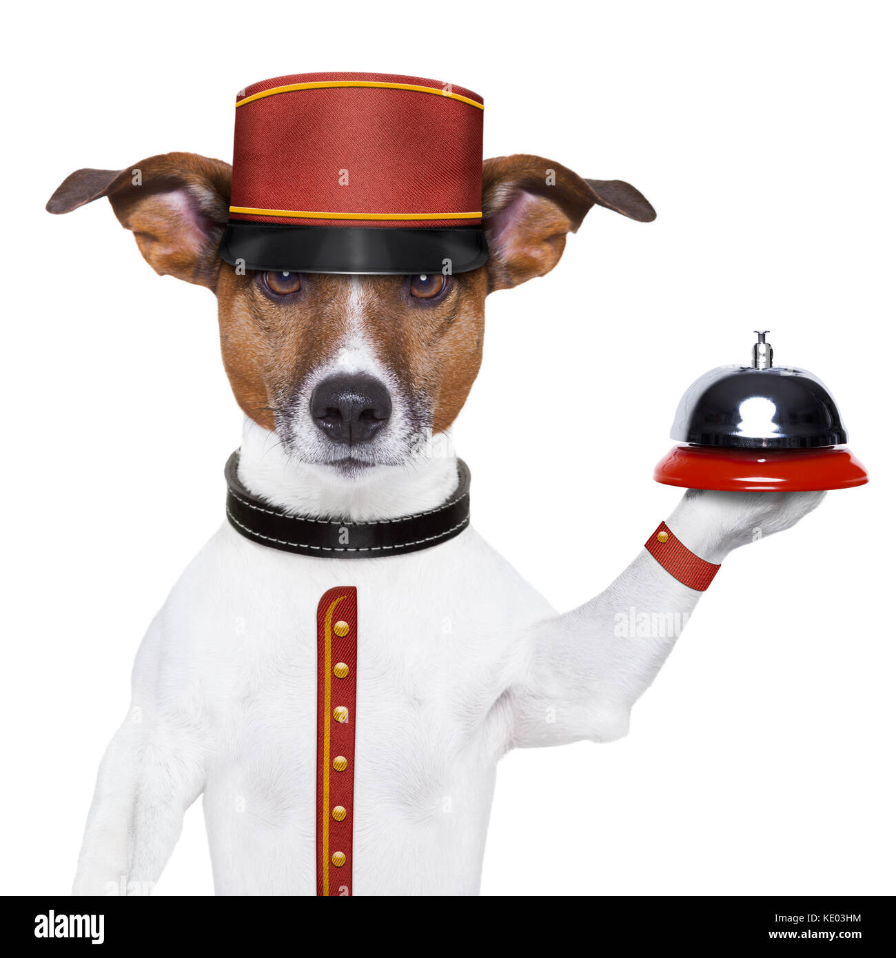 bellboy dog holding a bell with red hat - Stock Image