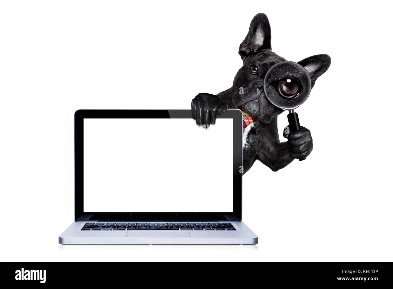French bulldog dog searching and finding as a spy with magnifying french bulldog dog searching and finding as a spy with magnifying glass isolated on white background behind pc computer laptop screen tablet isol voltagebd Choice Image