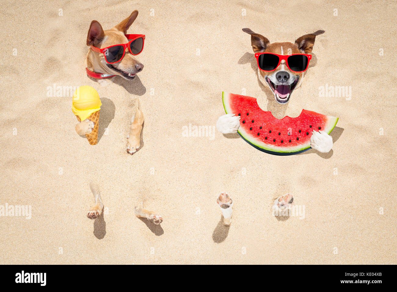 Funny Couple Of Dogs Buried In The Sand At Beach On Summer Vacation Holidays Wearing Red Sunglasses Eating A Fresh Juicy Watermelon And Ice