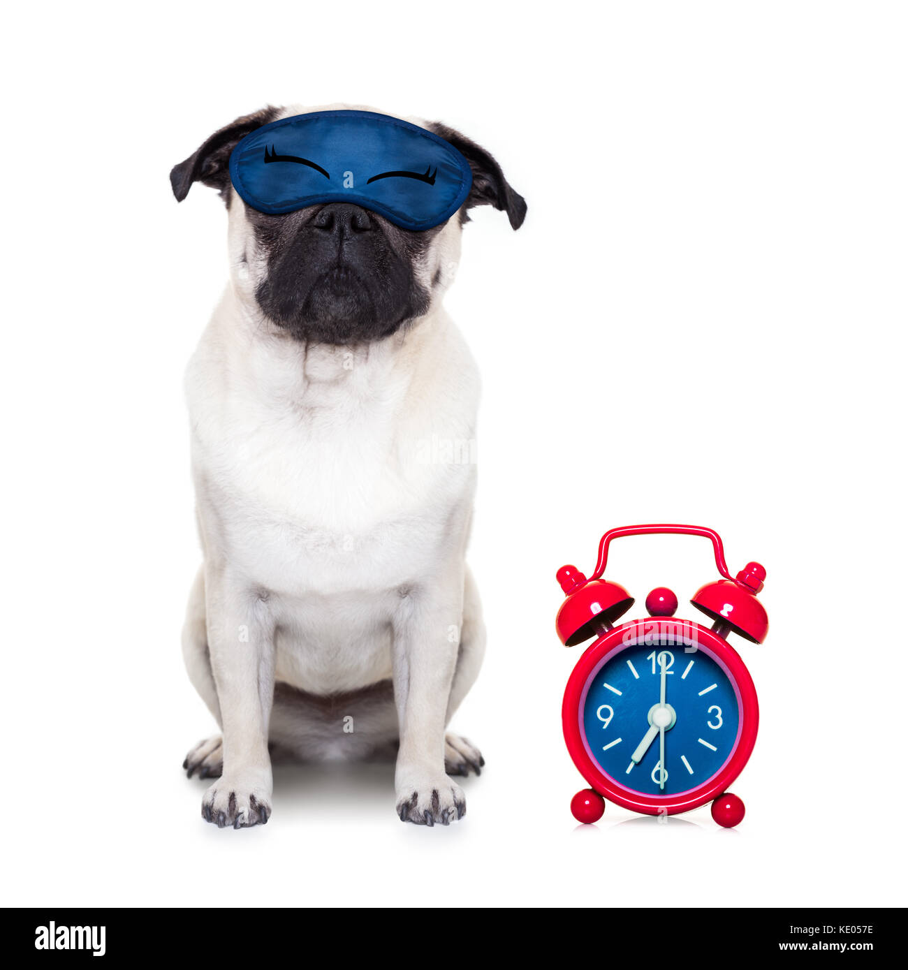 pug  dog  resting ,sleeping or having a siesta  with alarm  clock and eye mask, isolated on white  background - Stock Image