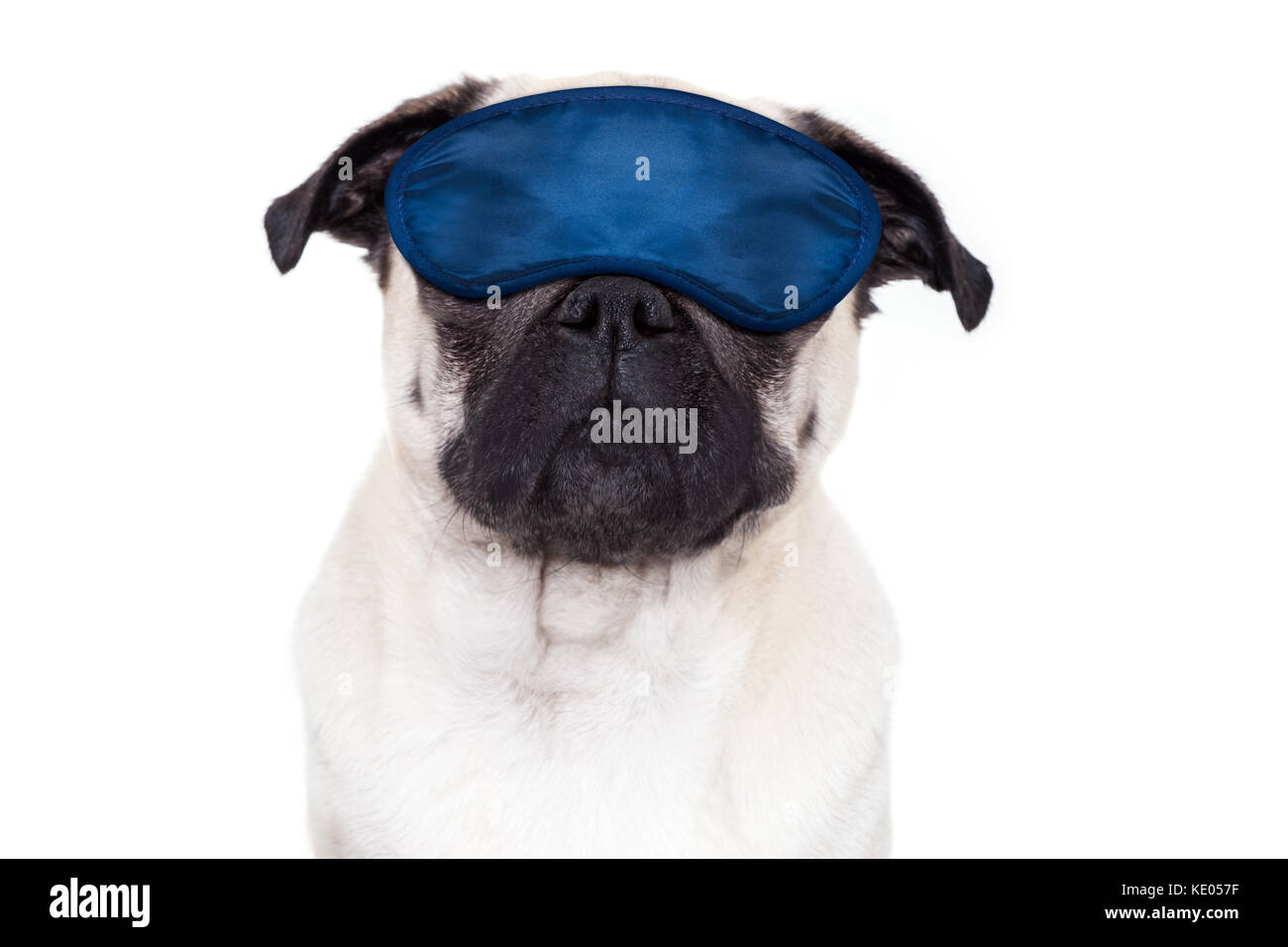 pug  dog  resting ,sleeping or having a siesta  with eye mask, isolated on white background - Stock Image