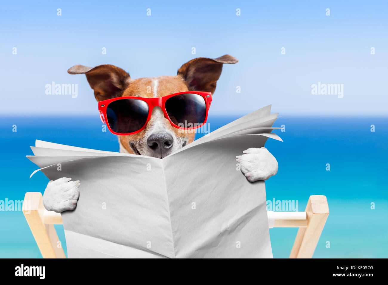 Jack Russell Dog Reading Blank Newspaper On Hammock At The Beach Summer Vacation Holidays Wearing Funny Sunglasses