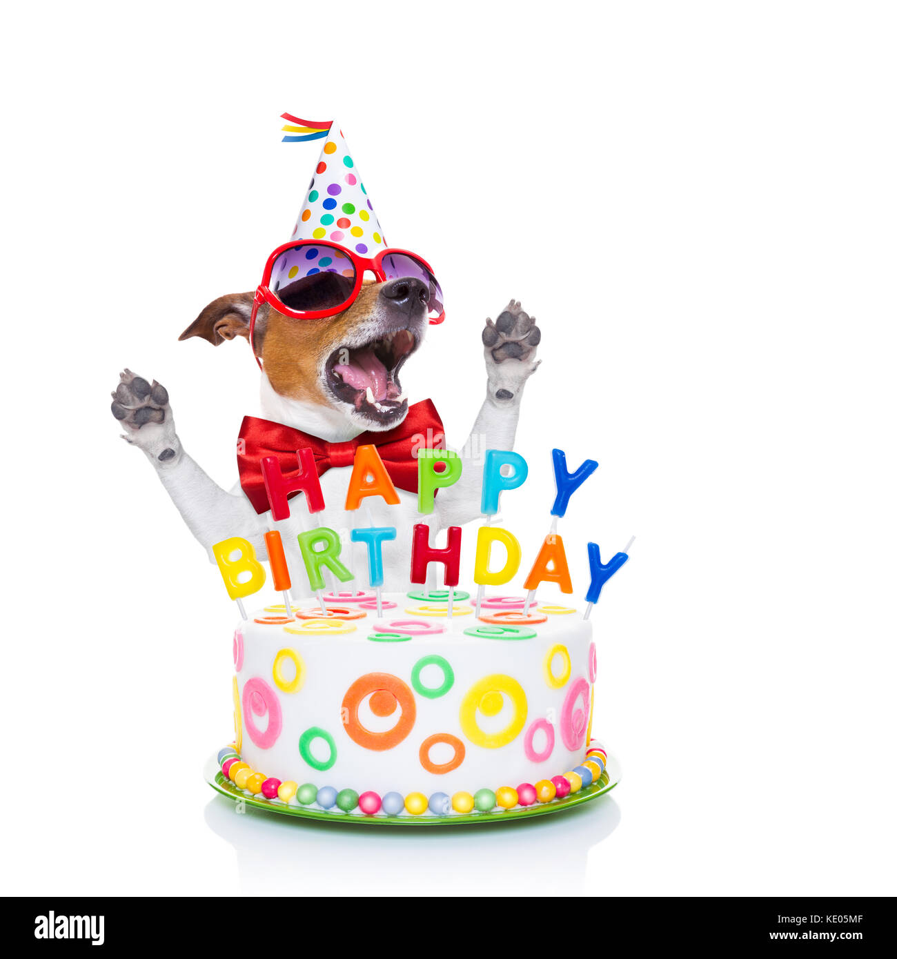 Jack Russell Dog As A Surprise, Singing Birthday Song ,behind Funny Stock Photo: 163502991