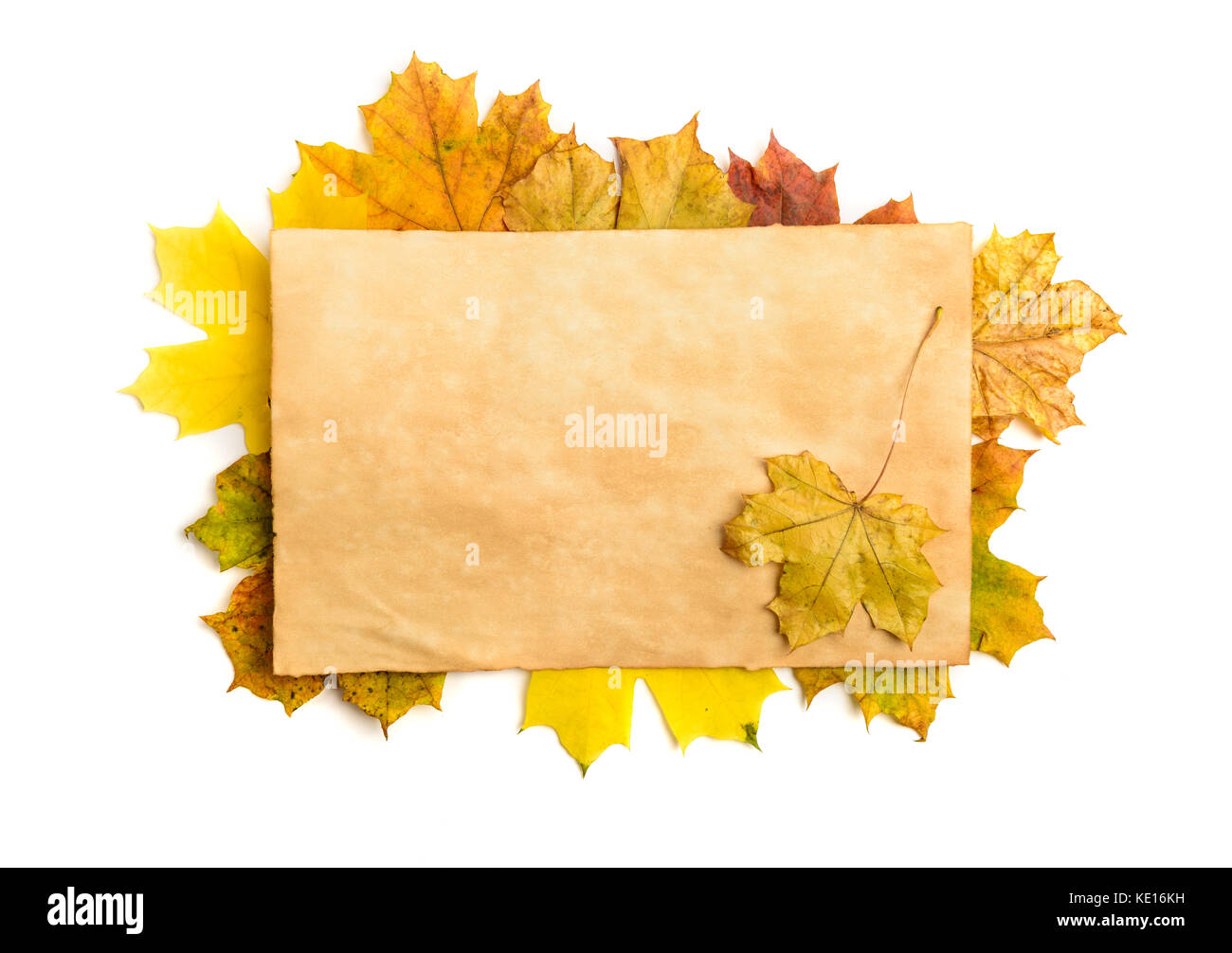 fall leaf template stock photos fall leaf template stock images
