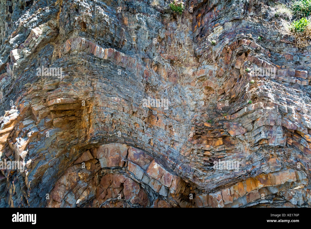 Detailed, Colourful detail of Folds in the Cliff Face at Babbacombe Cliffs on the North Devon Coast Near Bucks Mills. - Stock Image