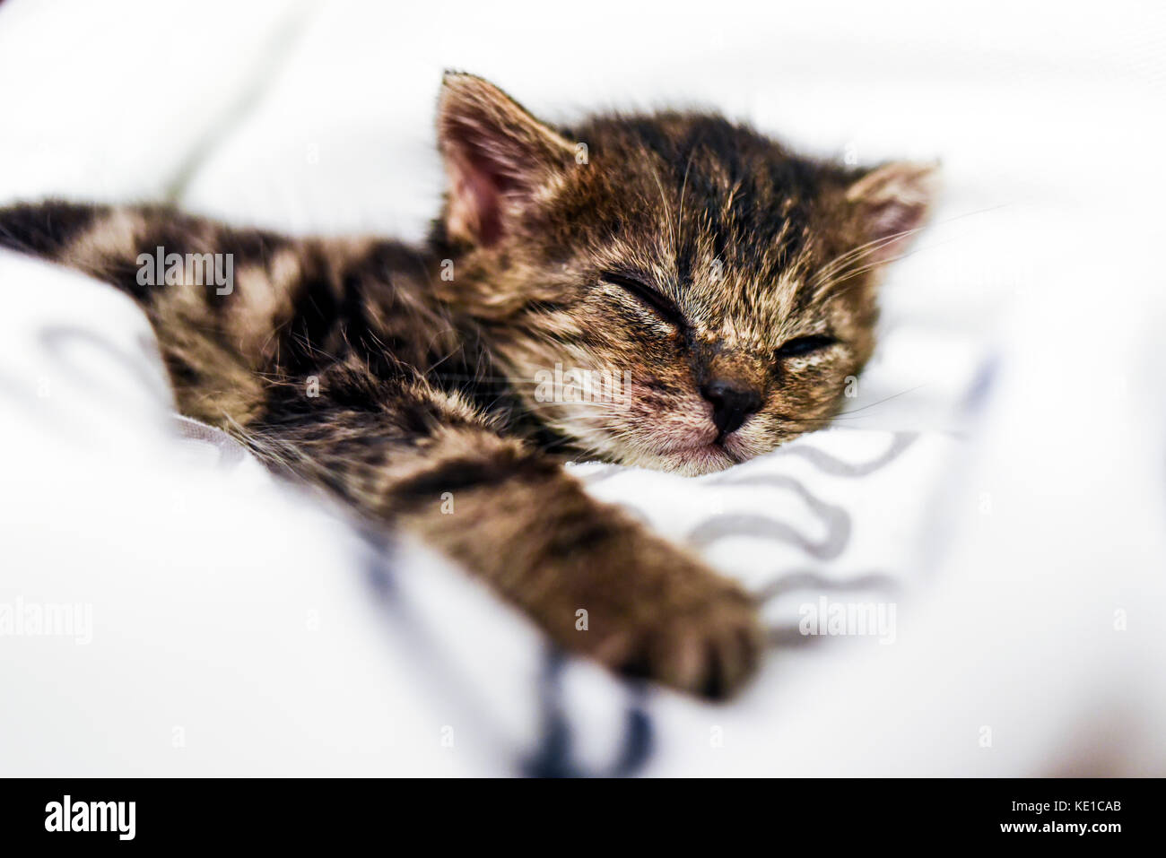 A cute little kitten sleeping in a blanket at home. - Stock Image