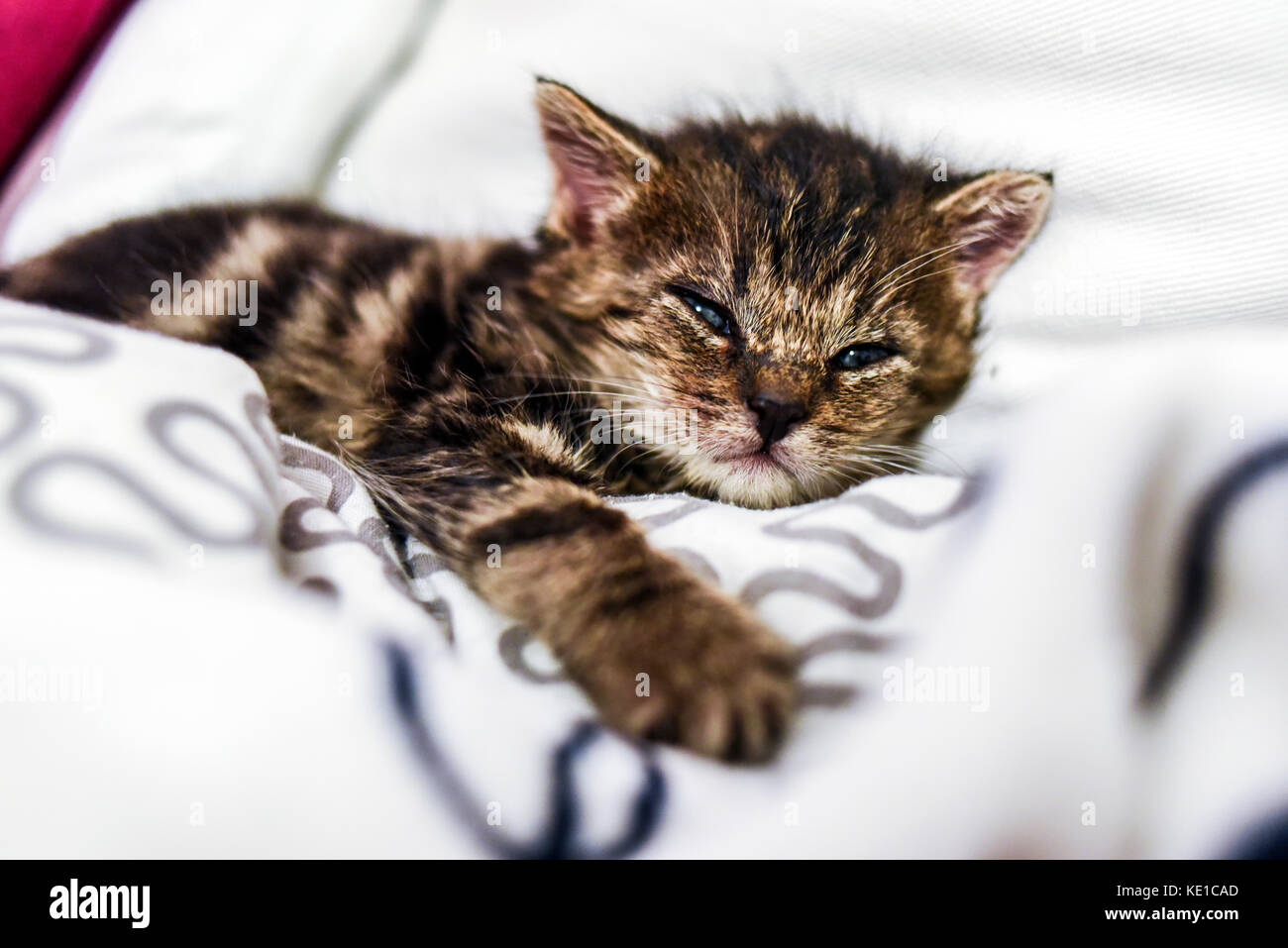 A cute little kitten lying in a blanket at home. Stock Photo