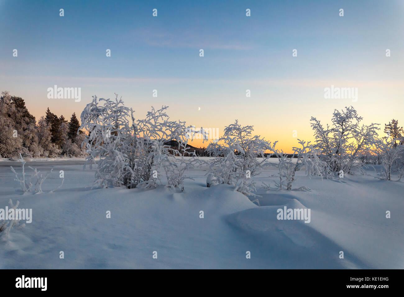 Bush on the frozen lake at sunset - Stock Image
