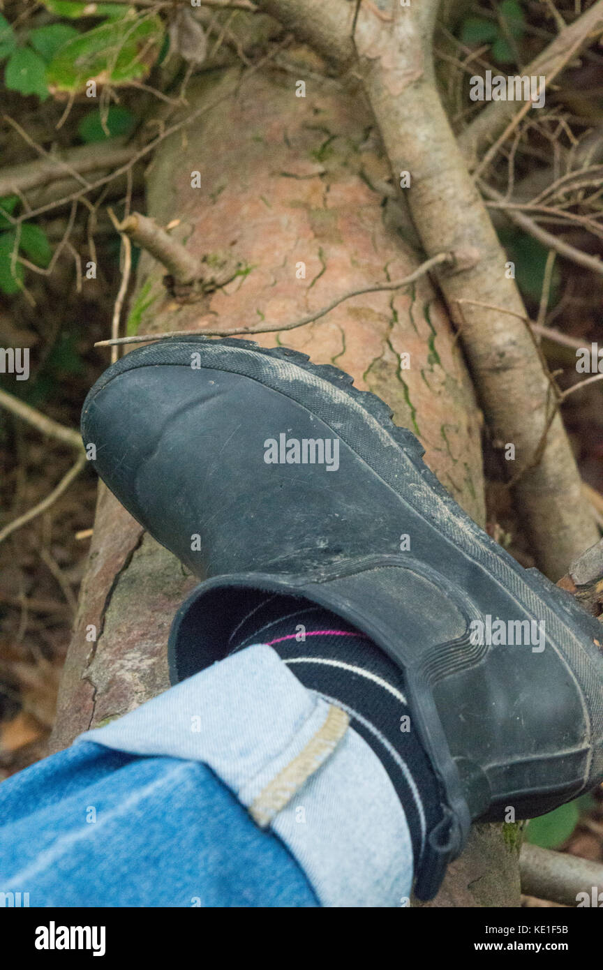 lady wearing muddy Chelsea welly boot climbing over fallen tree, countryside, fresh air - photo Stock Photo