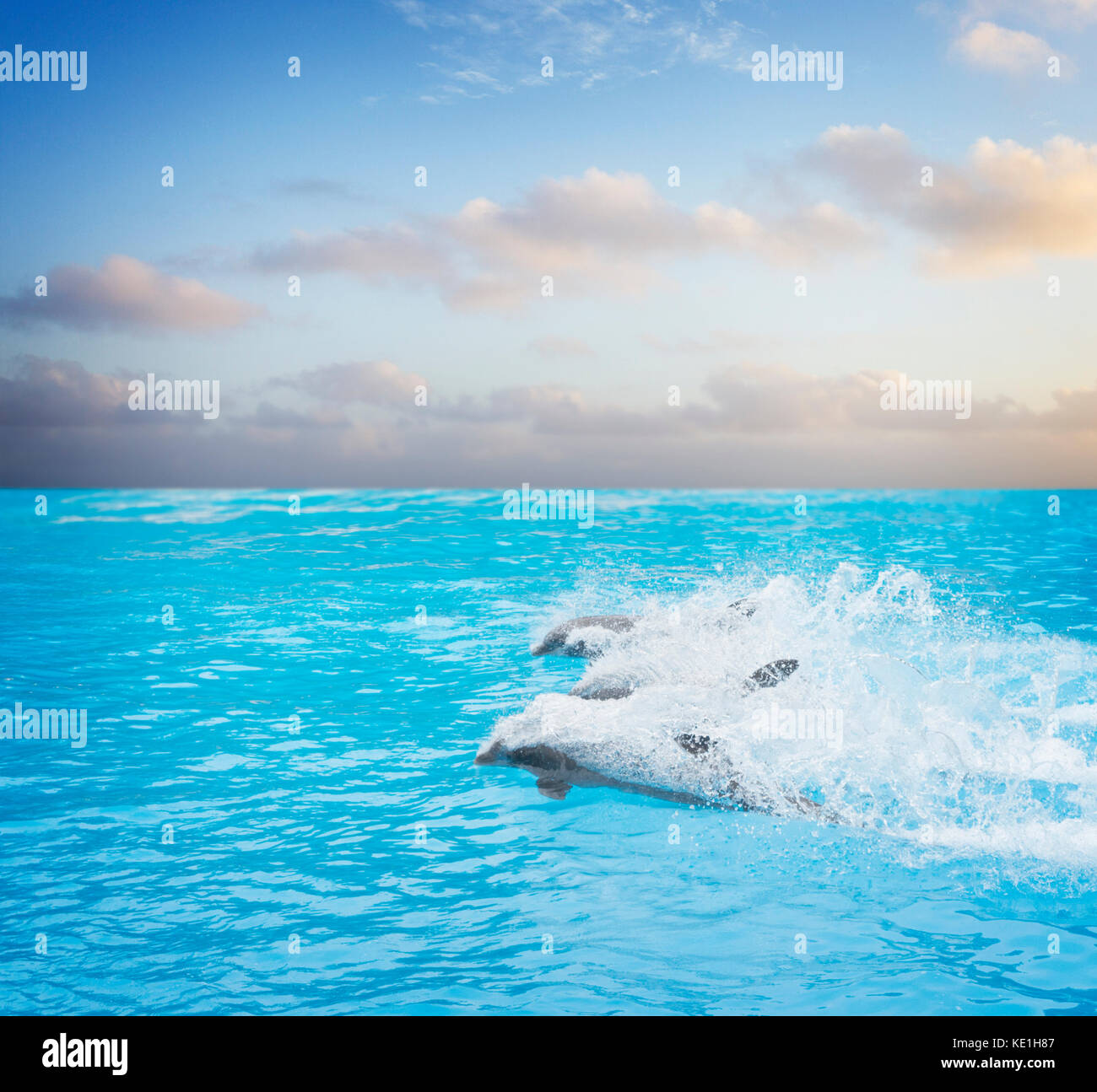 pack of jumping dolphins Stock Photo