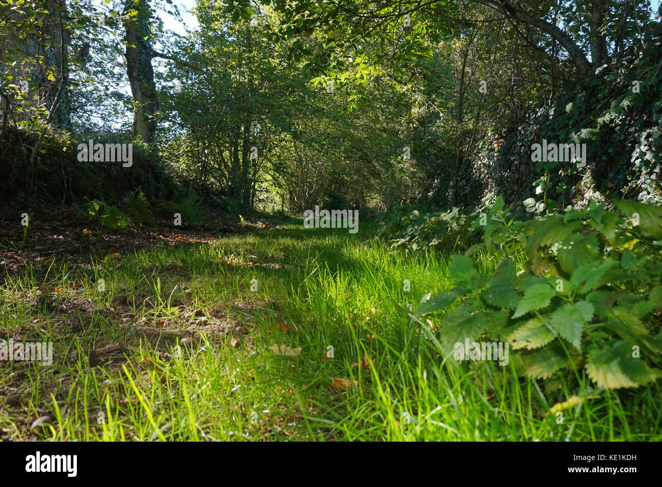 Rural footpath with green vegetation, Mortemart, Haute-Vienne, Limousin, France - Stock Image