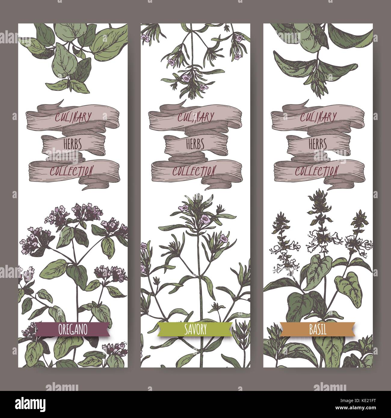 Set of three color vector banners with oregano, savory, basil sketch. Stock Vector