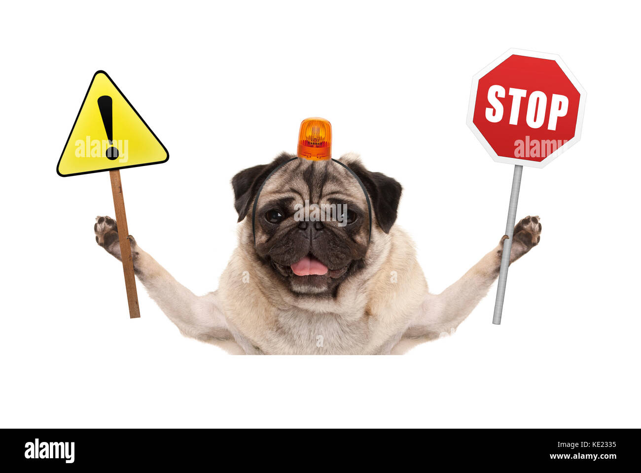 smiling pug dog holding up red stop sign  and yellow exclamation mark sign, with orange flashing light on head, - Stock Image