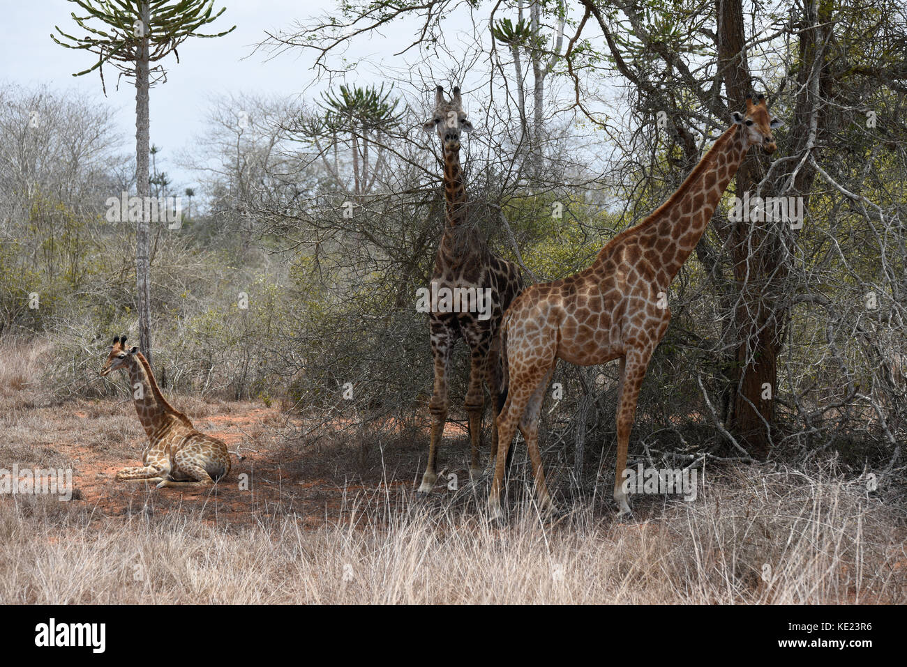 Angolan National Park south of Luanda - Stock Image