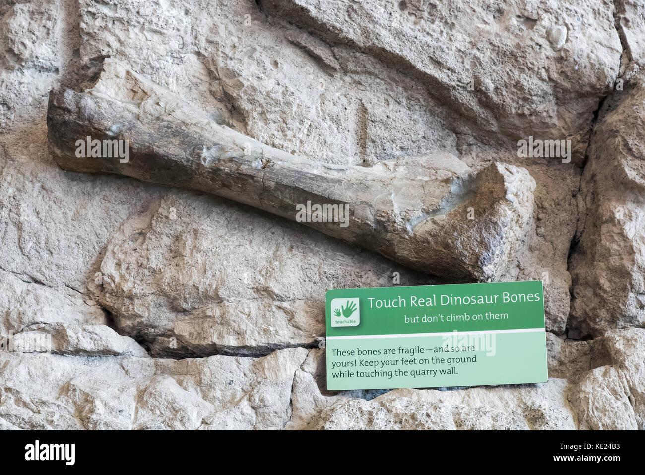 Dinosaur Bone on Display, Dinosaur Quarry Exhibit, Dinosaur National Monument, Utah, USA - Stock Image