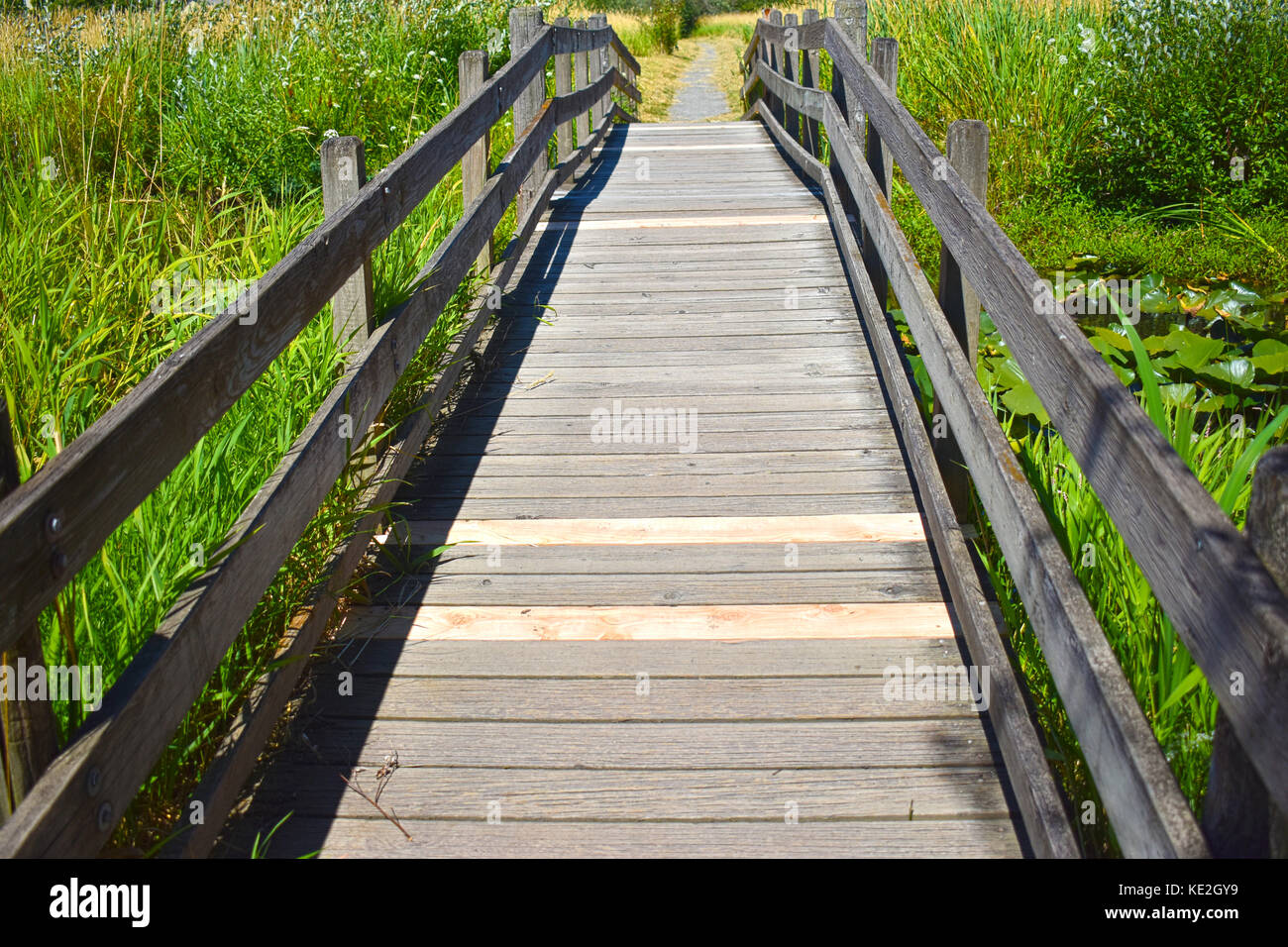 Wooden Bridge with new planks at Tennant Lake Park in Ferndale, Washington - Stock Image