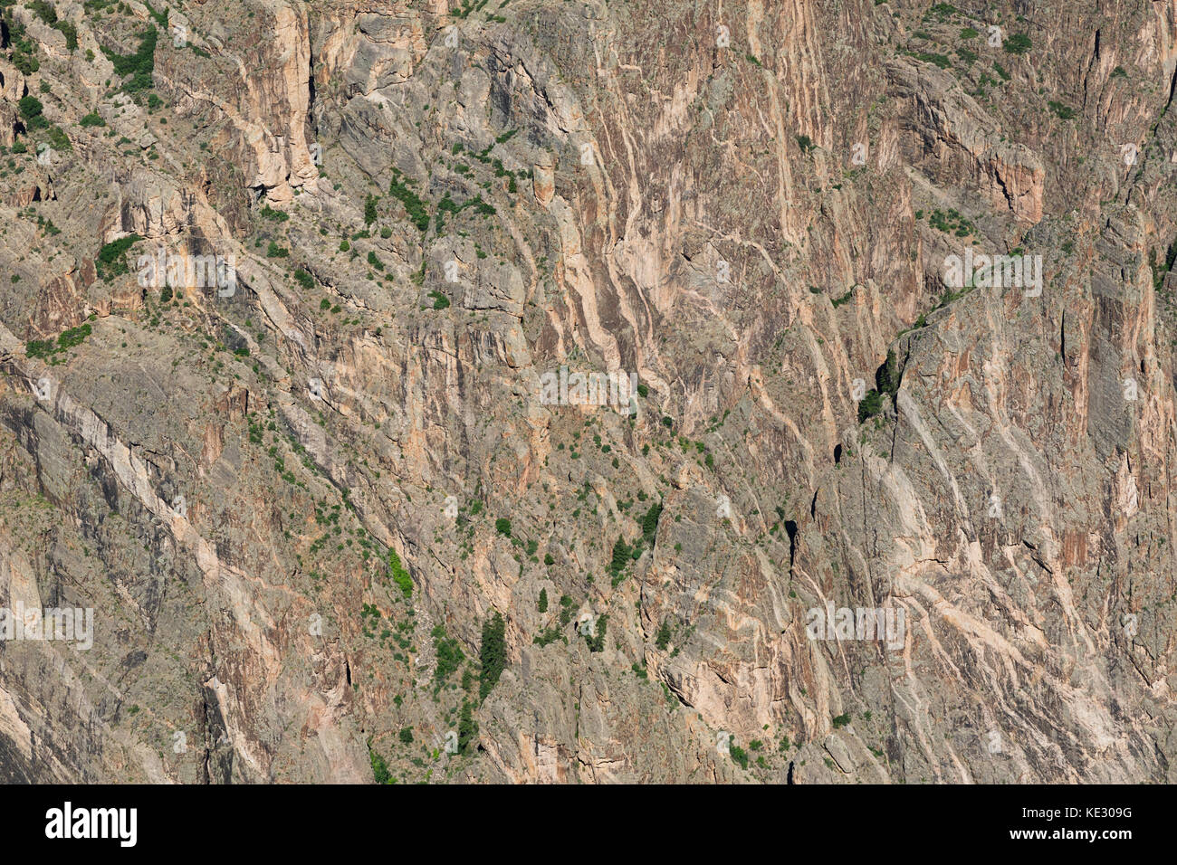 Close up of canyon wall showing pegmatite dikes running through precambrian gneiss and schist, Black Canyon of the - Stock Image