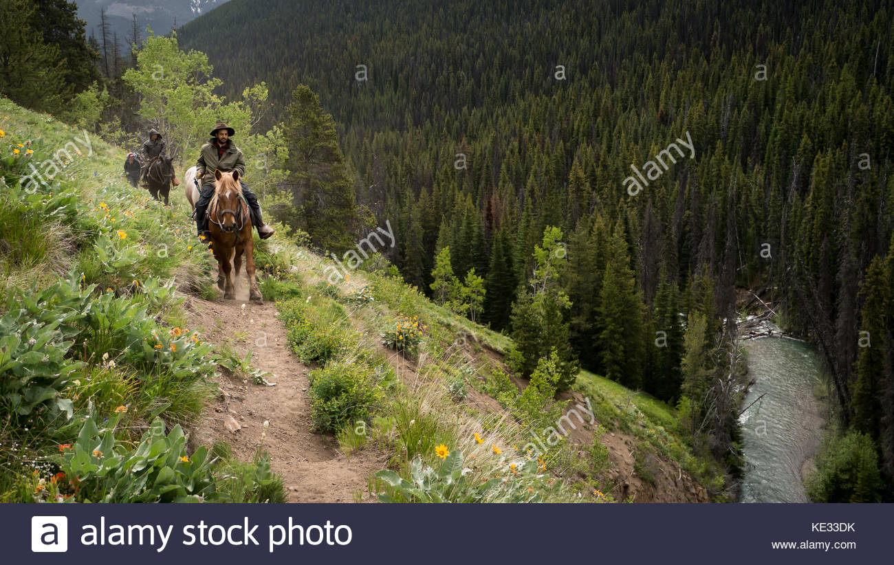 On a trail ride (horse pack trip) through alpine meadow in bloom along a steep sidehill on a rainy day -  South - Stock Image