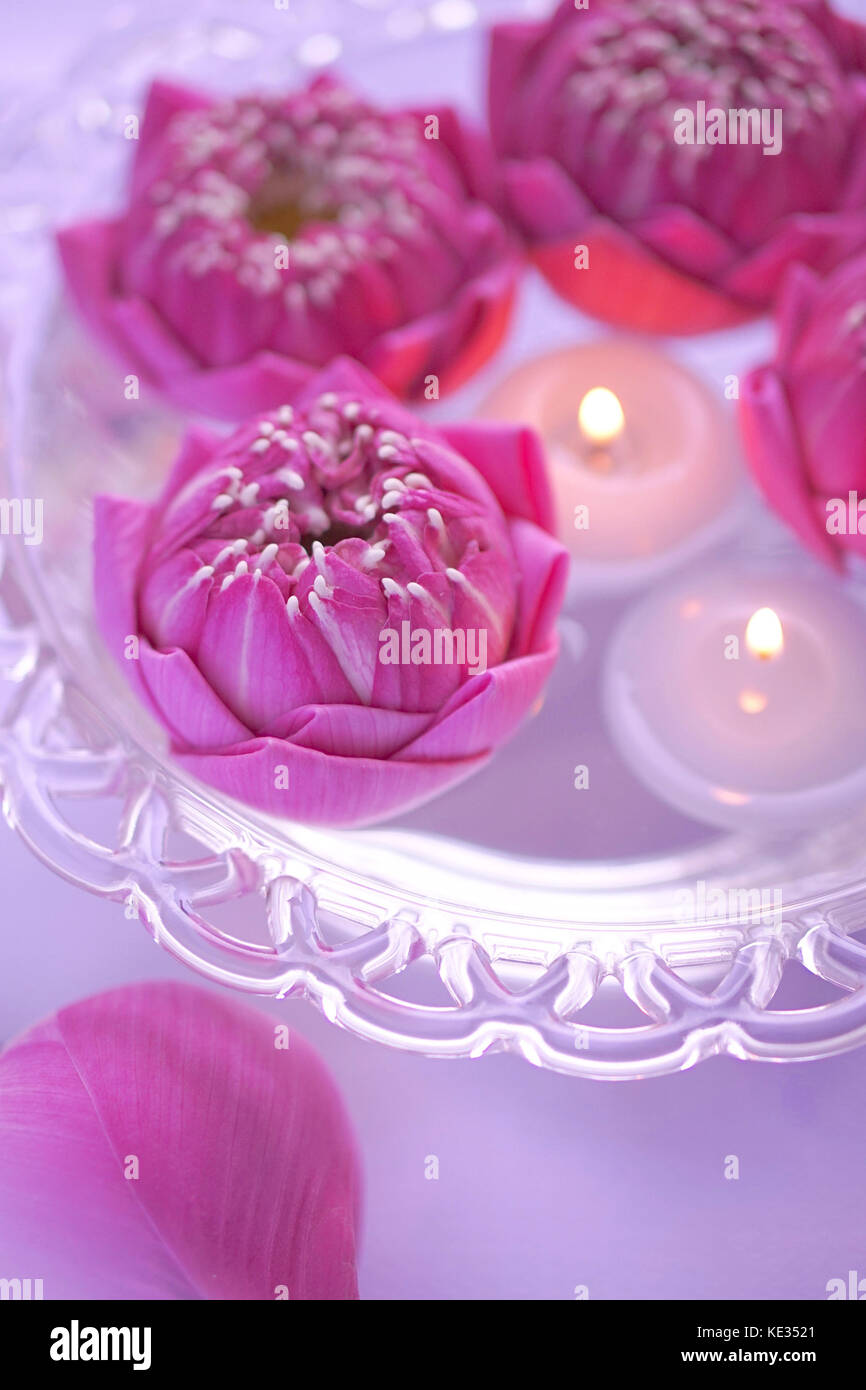 Pink Lotus Flower Candle Stock Photos Pink Lotus Flower Candle