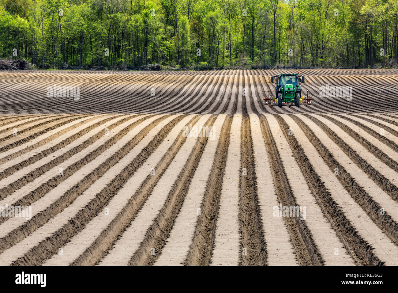Mechanized crop planting, Newbury, Ontario, Canada - Stock Image
