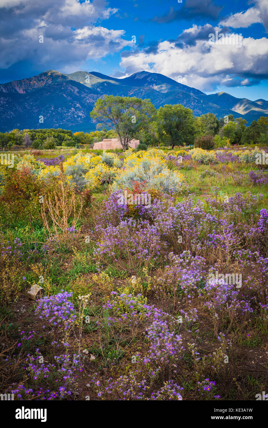 Wildflowers and Pueblo Peak in Taos, New Mexico - Stock Image