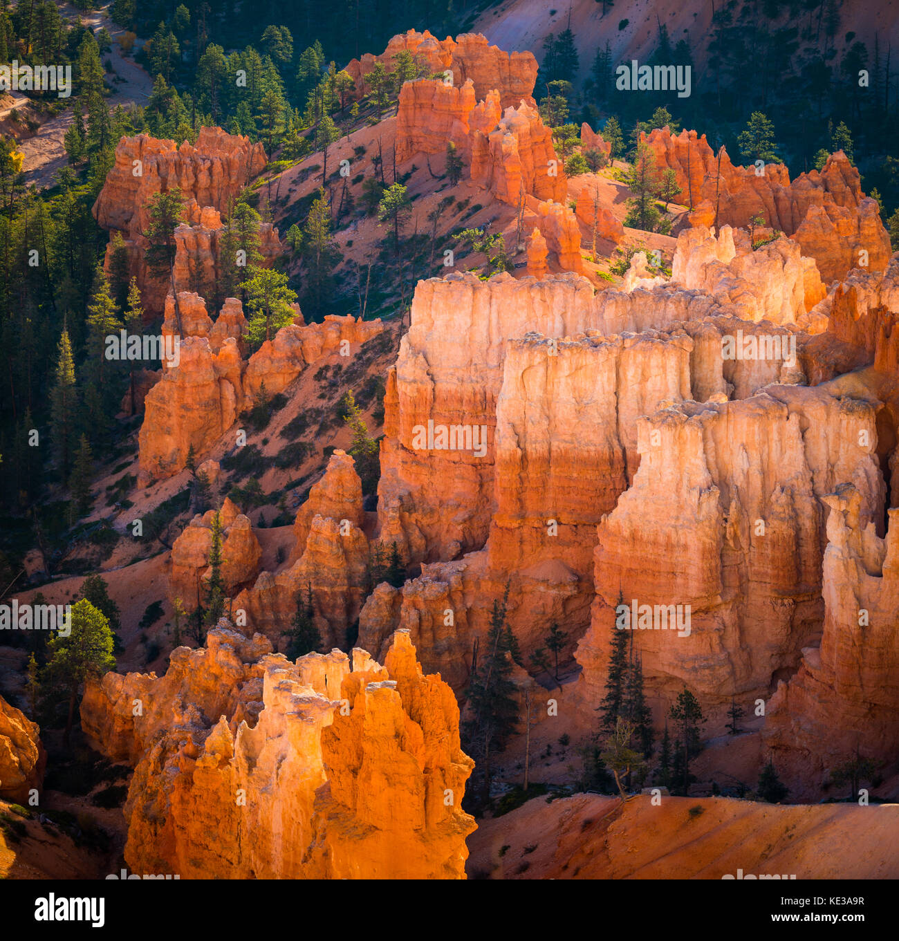 Bryce Canyon National Park, a sprawling reserve in southern Utah, is known for crimson-colored hoodoos, which are - Stock Image