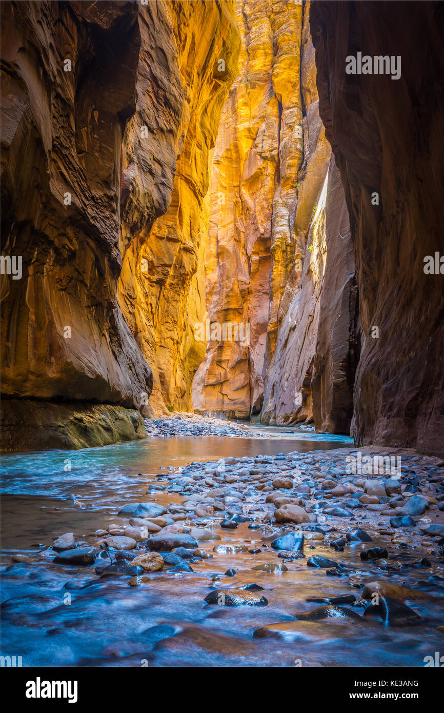 The Narrows in Zion National Park, (near Springdale, Utah) is a section of canyon on the North Fork of the Virgin Stock Photo