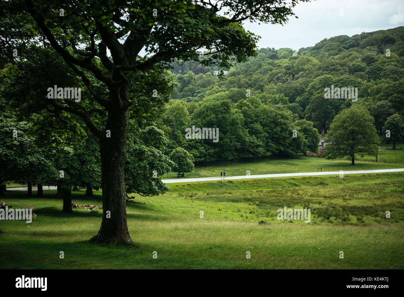 Athletes run through through trees in the British countryside. - Stock Image