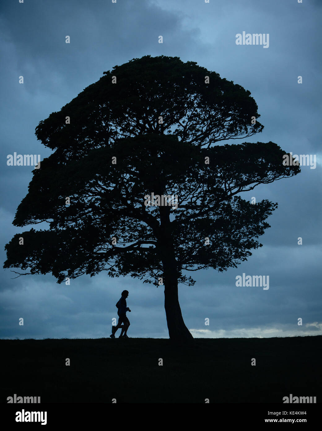 Runners silhouetted against the sky pass by trees in the British countryside. - Stock Image