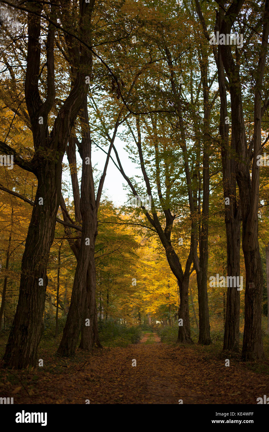 Magic path - red autumn in the park /  Beautiful Autumn in the park Stock Photo