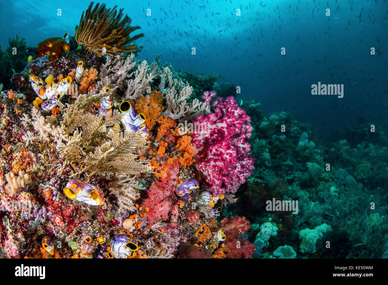 A Colorful Coral Reef With Fish Raja Ampat Indonesia Stock Photo Alamy
