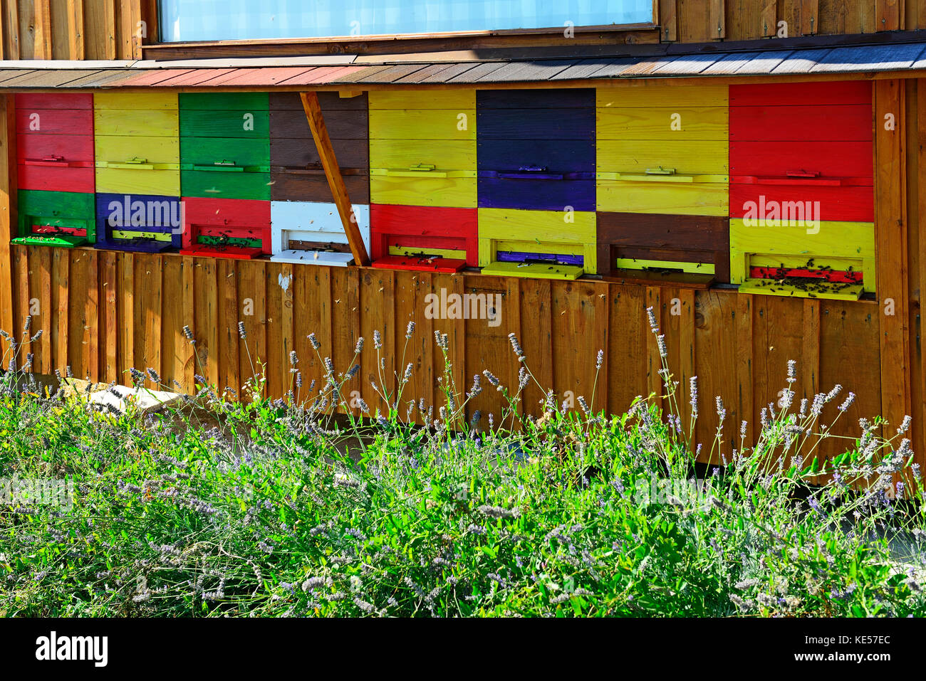 Coloured bee hives on a house wall, bee therapy, api tourism, Dobrovo, Brda, Slovenia - Stock Image