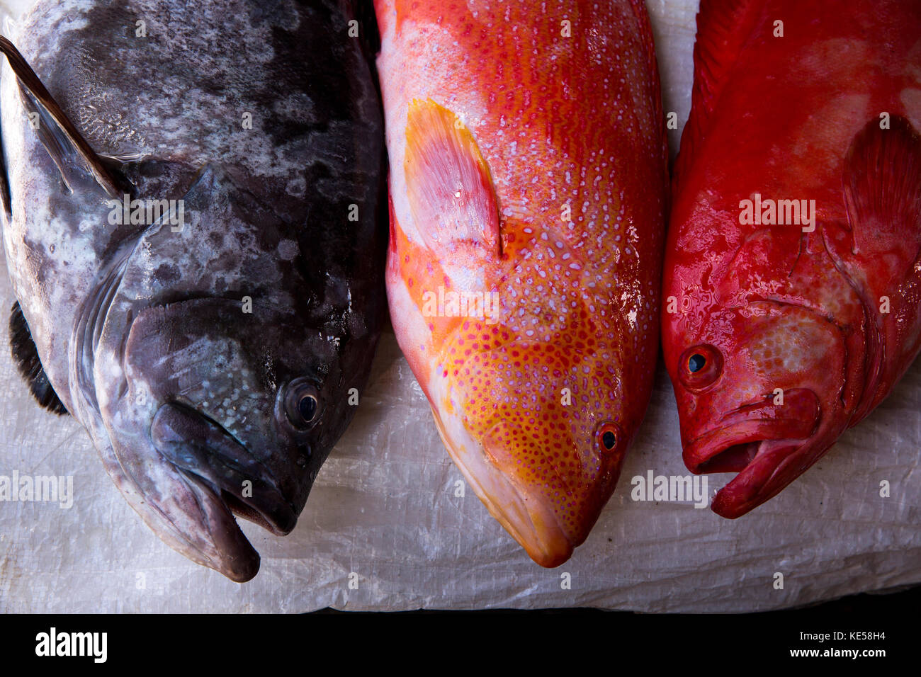 The Seychelles, Mahe, Victoria, Sir Selwyn Selwyn-Clarke Market, fish stall, reef fish, groupers for sale - Stock Image