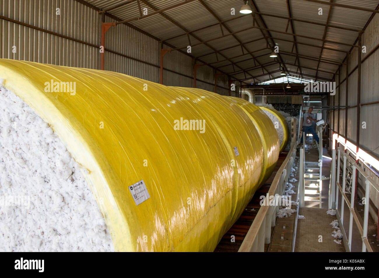 ROUND BALES OR MODULES GOING IN TO THE COTTON GIN - Stock Image