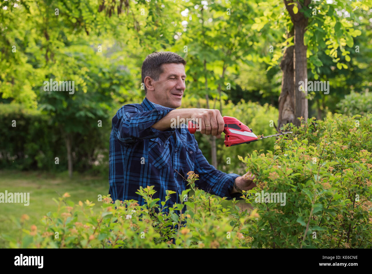 Retired but still healthy looking and smiling man is cutting and trimming the green hedge in the garden with the - Stock Image