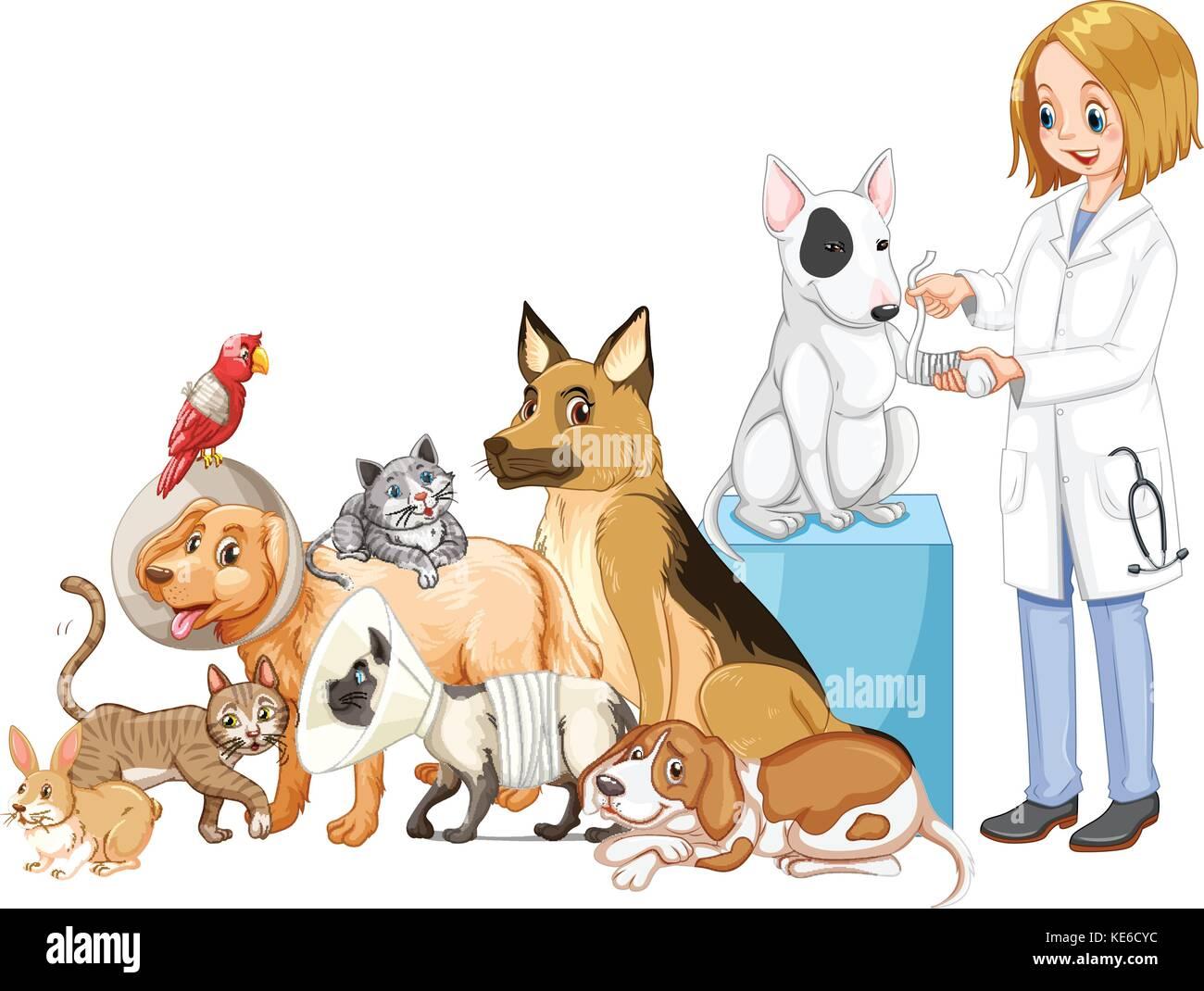 Vet and many injured animals illustration - Stock Vector