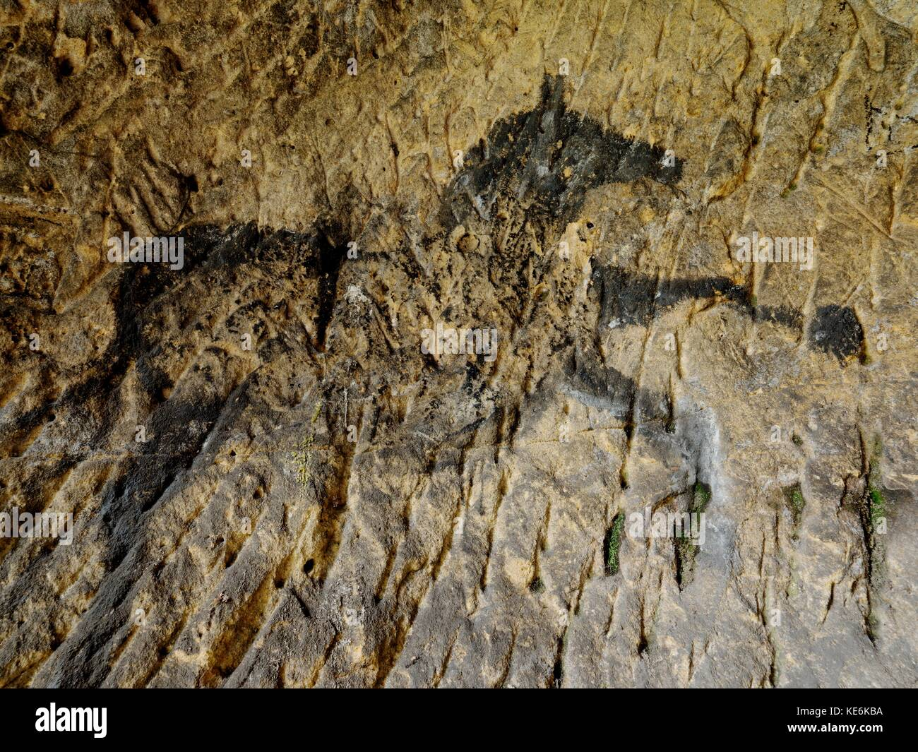Discovery of prehistoric paint of horse in sandstone cave. Spotlight shines on historical human painting. Black - Stock Image
