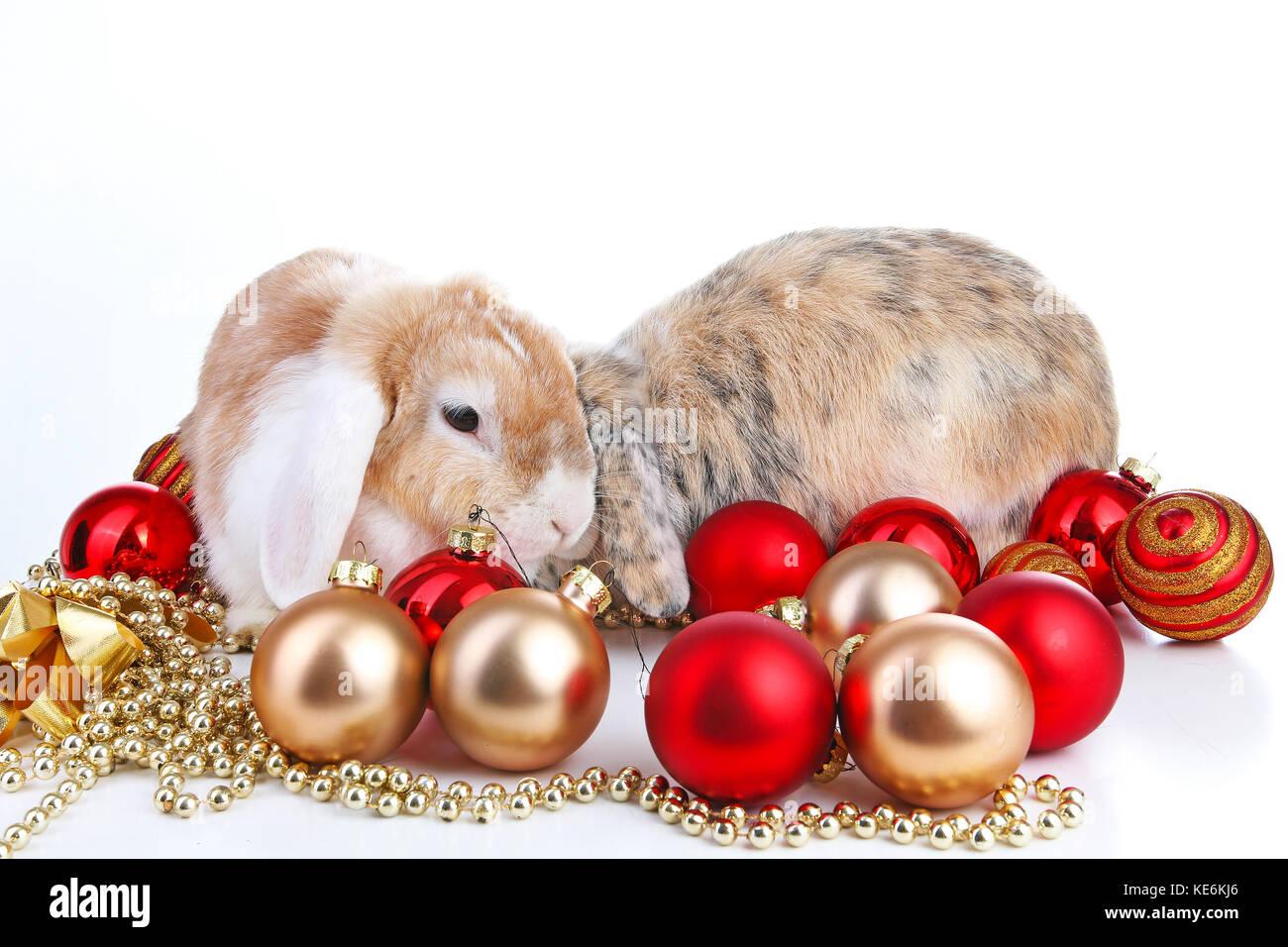 Christmas Animals Cut Lop Eared Rabbit Pet Friends On