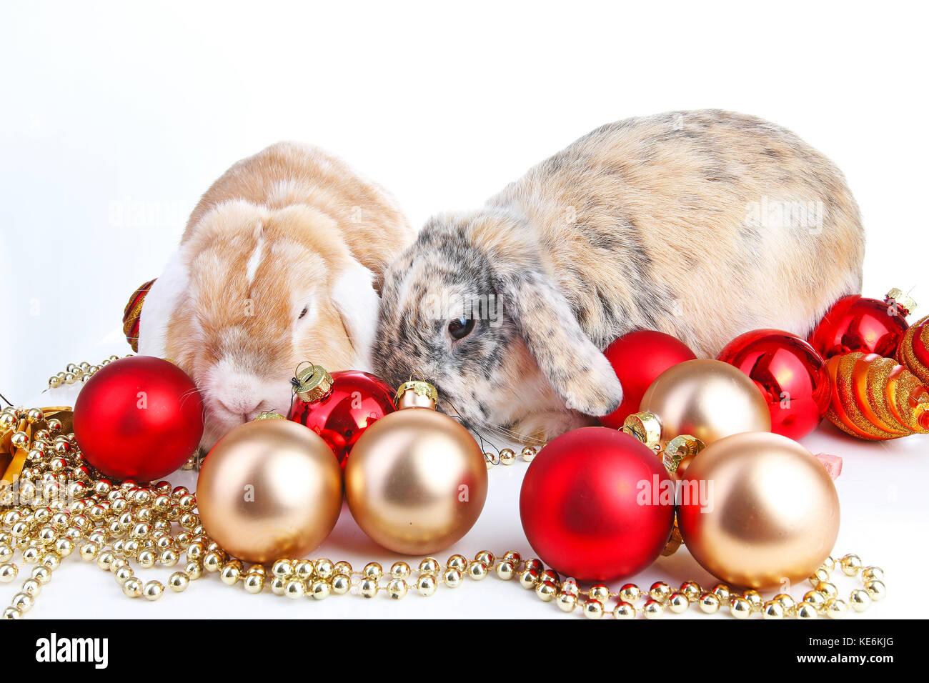Christmas Animals Christmas Pets Cute Lop Eared Rabbit