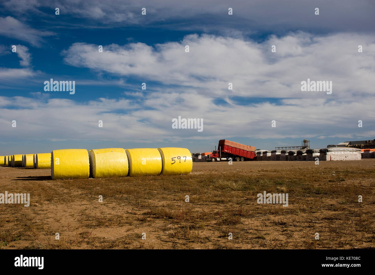 ROUND COTTON BALES OR MODULES AFTER BEING HAULED IN FROM FIELDS STORED IN GIN YARD UNTIL GINNED - Stock Image
