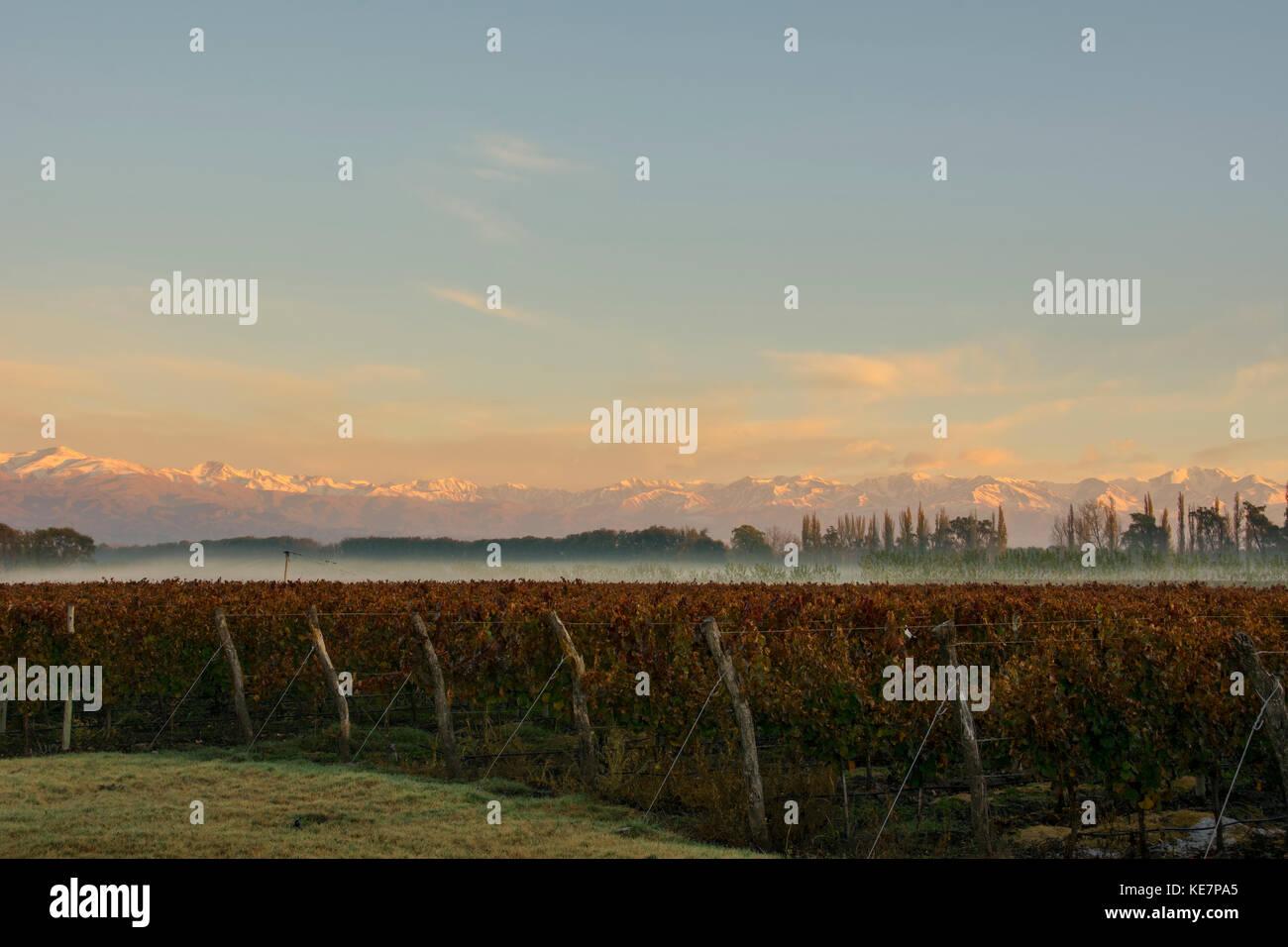 Sunrise Illuminates The Snow-Capped Mountains In The Distance While Fog Dissipates Over A Vineyard; Tunuyan, Mendoza, - Stock Image