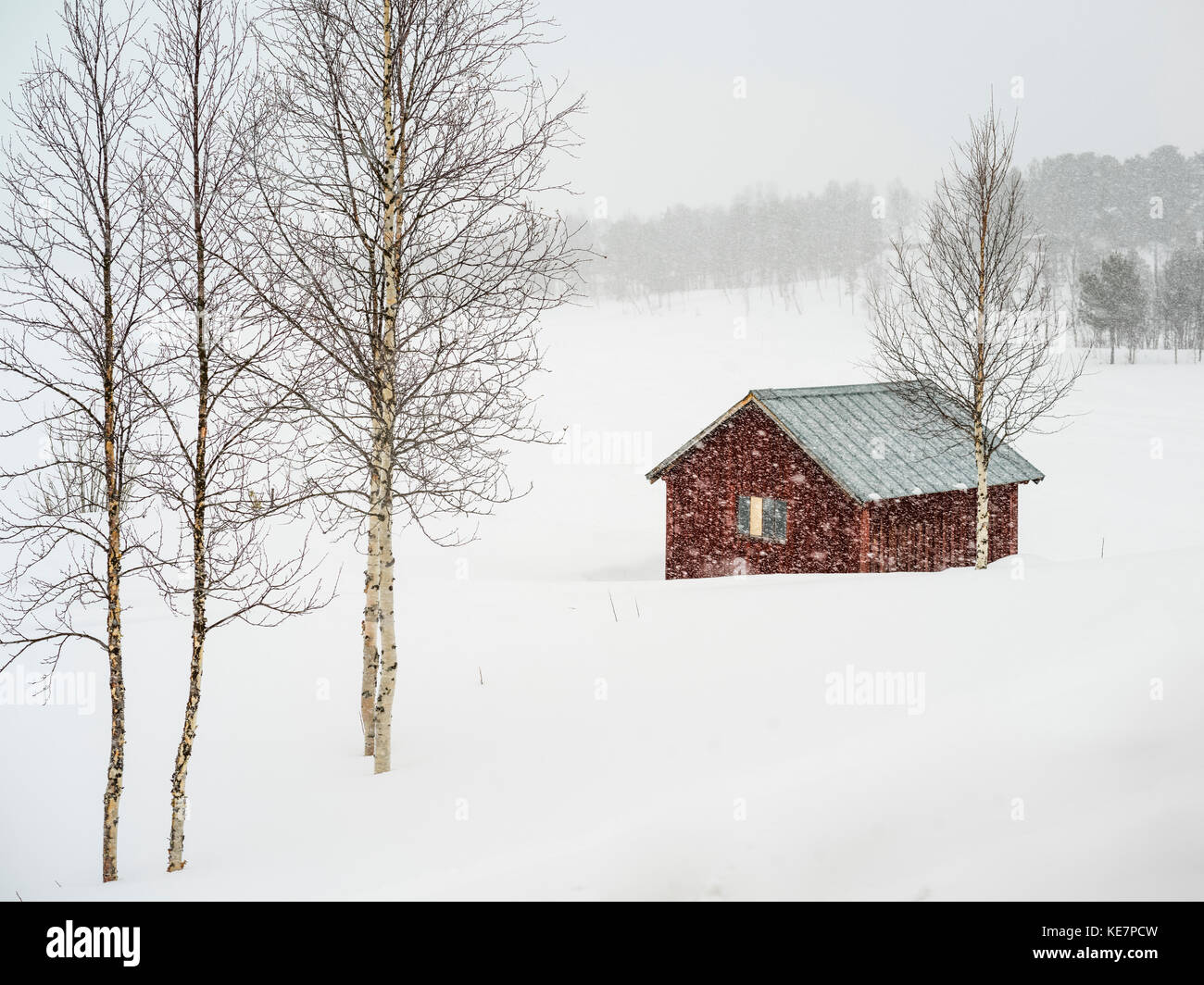 Snow Falling Over A Rural Landscape And Small Red Building Arjeplog Norrbotten County Sweden