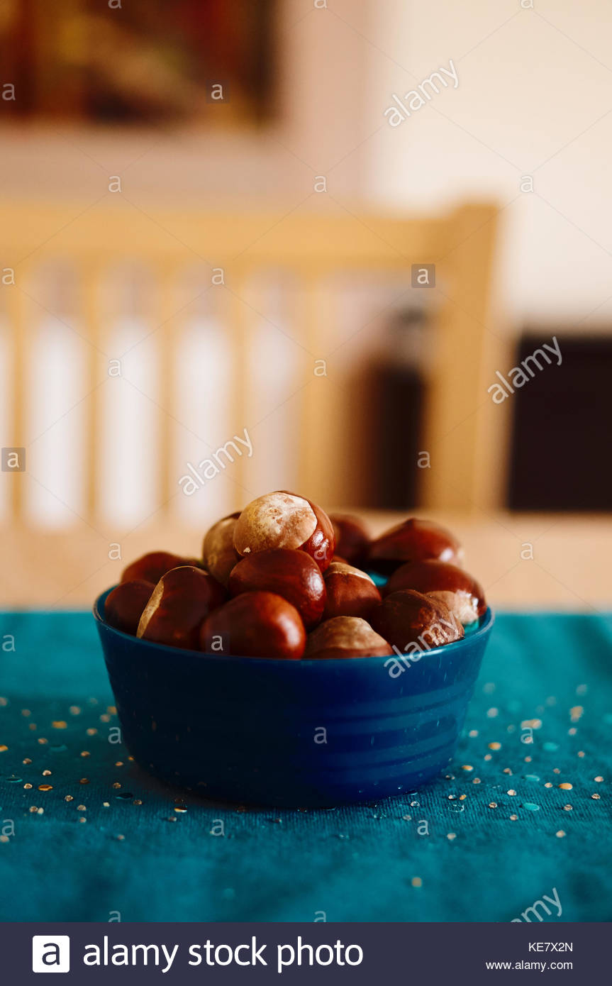 Whole fresh chestnuts in a blue plastic bowl on table in soft focus - Stock Image