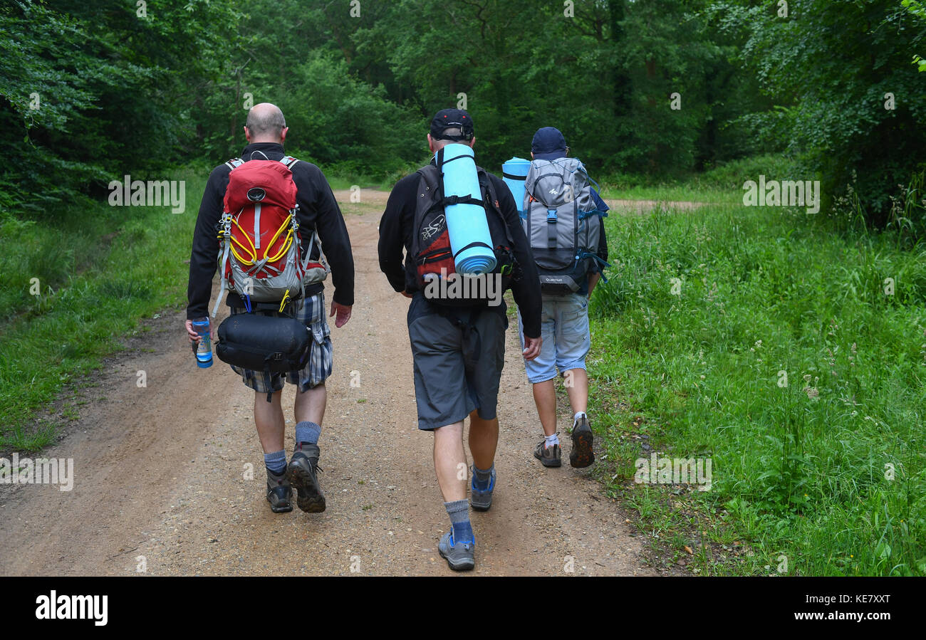 Three middle aged men walk on path in a forest after a night camping under the stars with no tents in the wilderness - Stock Image