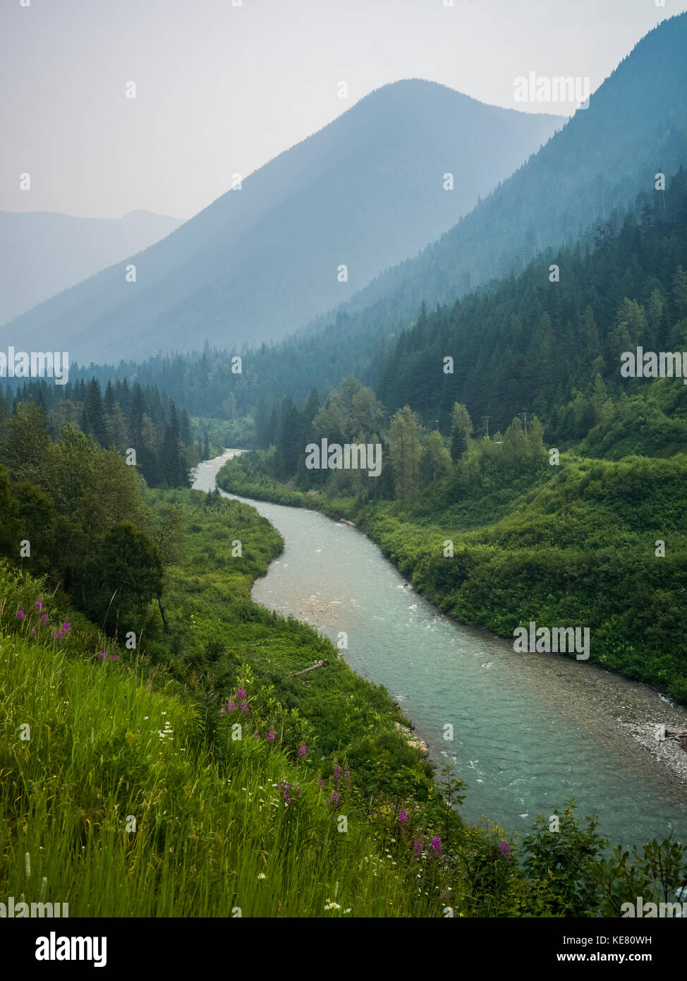 The Columbia River flowing through the Selkirk mountains with forests and wildflowers on the slopes; Revelstoke, - Stock Image