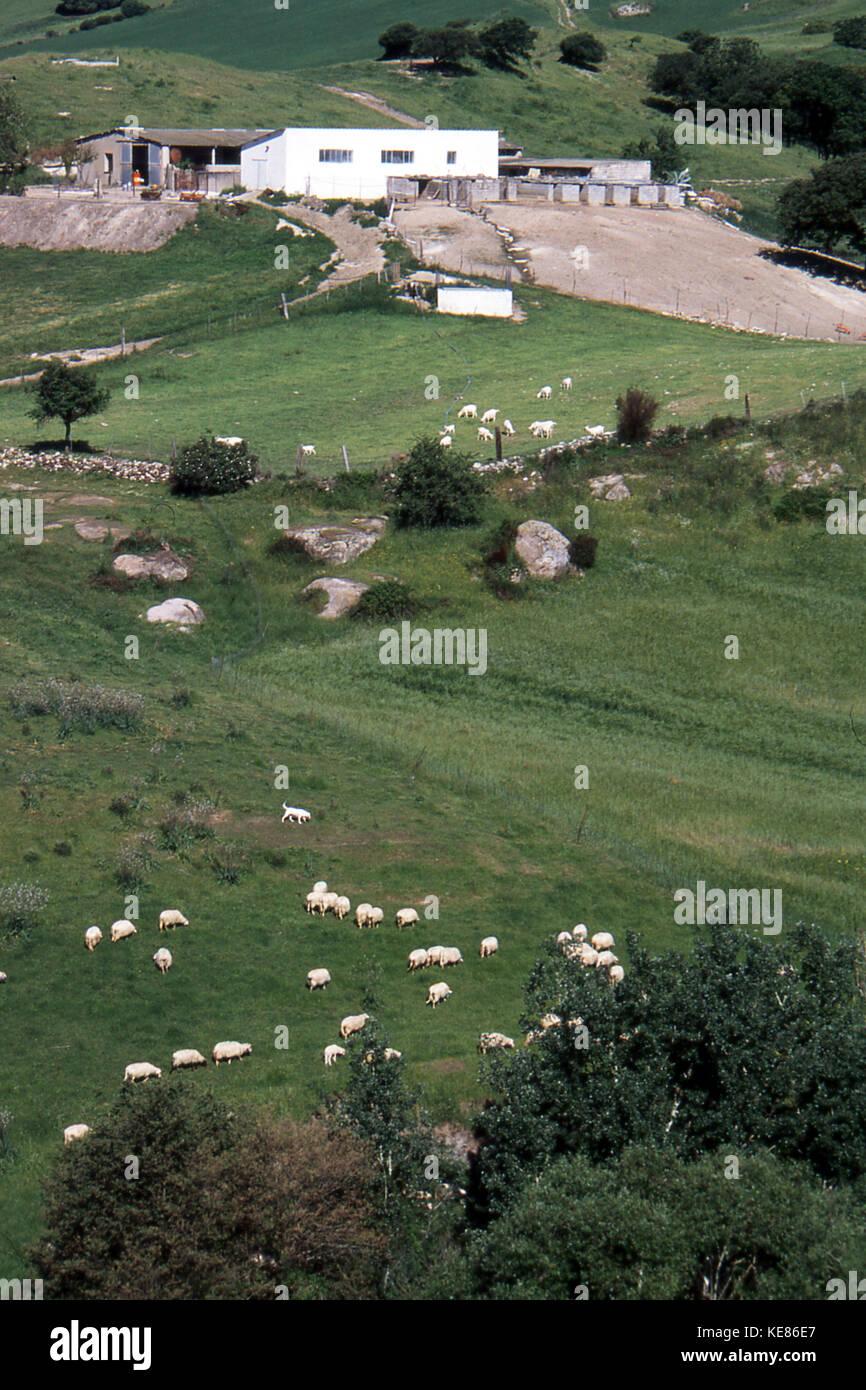 An farm in northern Sardinia - Stock Image